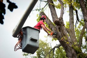 certified tree worker